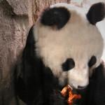 Bao Bao mag Brezeln