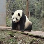 TaiShan_00164