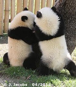 Kung Fu Panda-Quiz