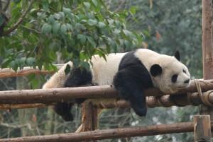 china201203B1525