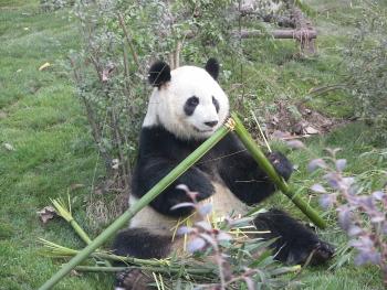 Zu Besuch bei Mei Lan