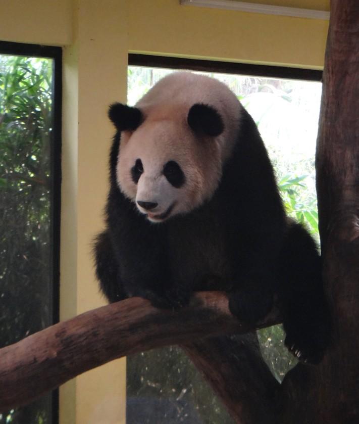 Pandas Report