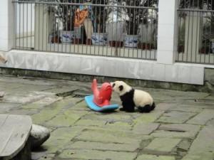 PandaKindergartenVBA781
