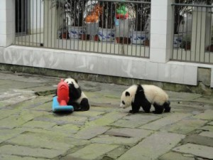 PandaKindergartenVBA788