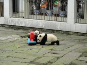 PandaKindergartenVBA789