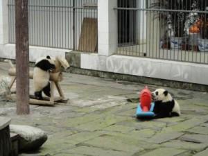 PandaKindergartenVBA792