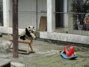 PandaKindergartenVBA793