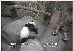 webcam Memphis Zoo