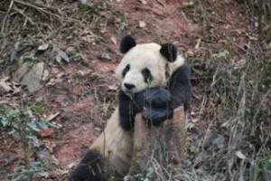 China03-2011A2-0190