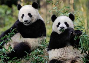 HuanHuan+ZiYuan