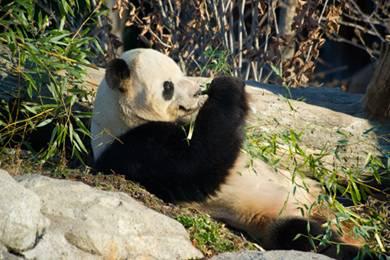 Sommer 2012 im Washington Zoo