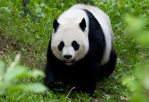 MeiXiang20110503-239MM