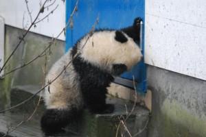 china201203A557