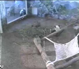 Neues aus Atlanta Zoo