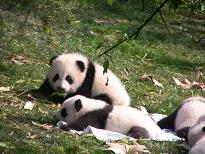 Das erste Baby für Guangdong