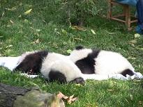 Guangzhou Zoo – 1. Untersuchung