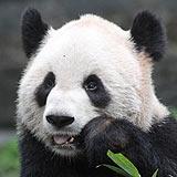 2012-11-04-Chongqing-Zoo---Er-Shun-021