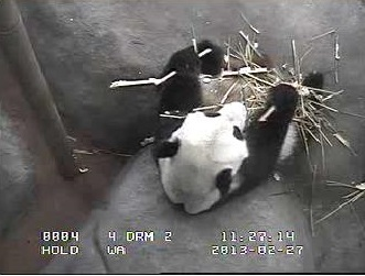 Impressionen aus dem Memphis Zoo