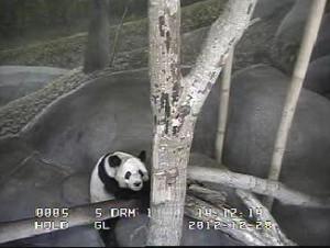 PandaMemp