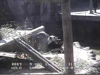 PandaMmph