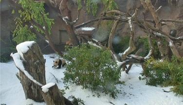 Mr. Wu und der Schnee