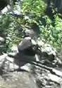 Liebesrausch im Ueno Zoo