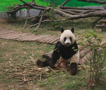 Liuzhou Panda Haus
