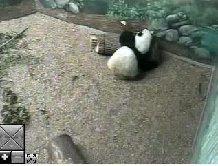 Ein  Webcam-Nachmittag