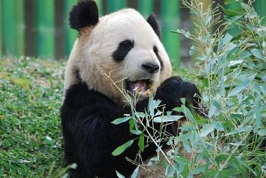 Auch im Zoo Madrid wird gefeiert