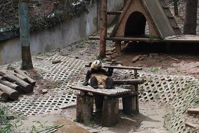 Ya'an, die Heimat der Großen Pandas
