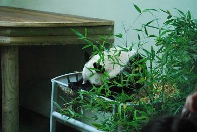 Edinburgh Zoo News