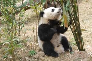 Bamboos1