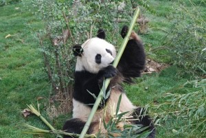 Bamboos3