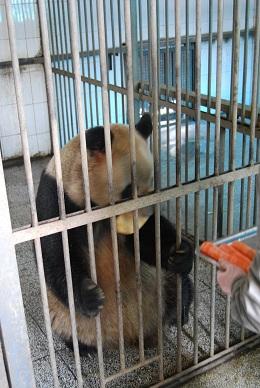 Die Betreuung im Jinan Zoo