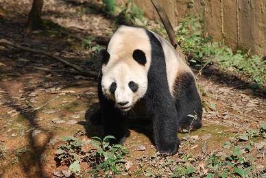 Beautiful Tai Shan