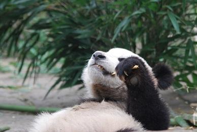Große Geburtstagsparty im Taiyuan Zoo