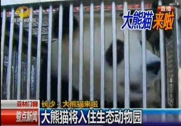Zwei Große Pandas für Changsha