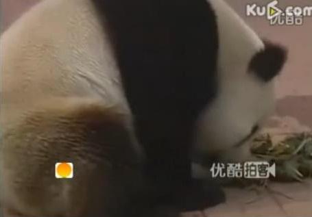 Die Großen Pandas feiern mit