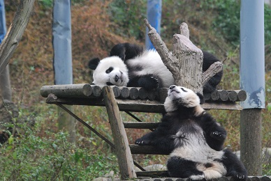 Auch im Dalian Zoo wurde gefeiert