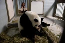 panda_cubs2013_a_lunlun_rebeccasnyder_ZA_0443