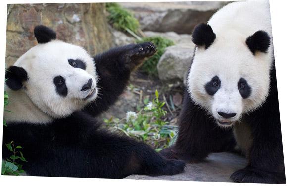 Die Paarungszeit im Adelaide Zoo