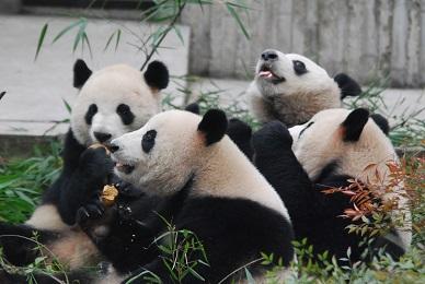 Ying Mei feiert Herbstfest