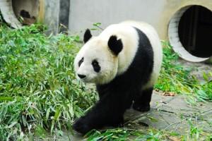 Xin Yue