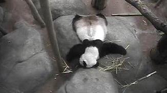 Erntedankfest im Memphis Zoo