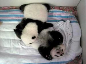 panda1edited