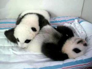 panda2edited