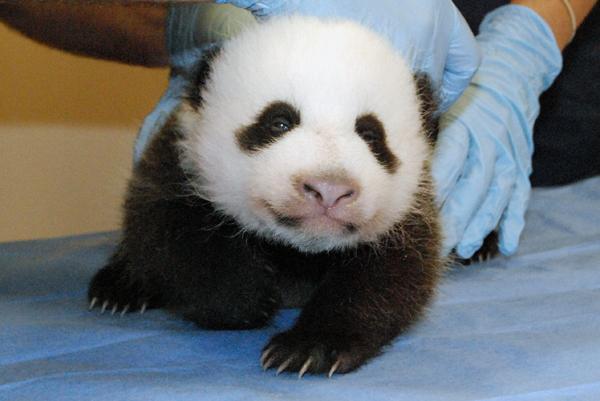 Neues aus Washington Zoo