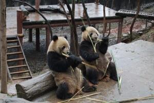 china201203A001