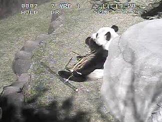 Neues aus Memphis Zoo