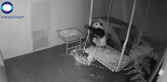 Webcam ist Offline